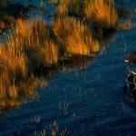 Eléphants dans le delta de l'Okavango, Botswana (19°26' S - 23°03' E). (c) Yann Arthus-Bertrand