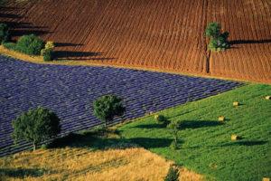 Photo de champ de lavande © Yann Arthus-Bertrand