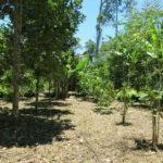 Parcelle agroforestière (c) Fondation GoodPlanet