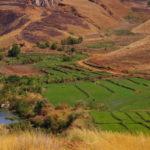 Riziculture en saison sèche © Agrisud International