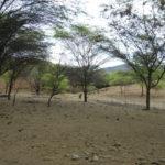 Bosque Seco © Kinomé