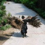 Collecte de bois par les femmes © Initiative Développement