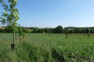 Parcelle Agroforestière (c) Association Française d'Agroforesterie