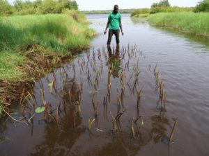 Pépinière paletuviers à Adounko (c) Benin Ecotourism Concern
