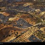 Vallée de Seta dévastée par un incendie en aout 2017 (c) Yann Arthus Bertrand