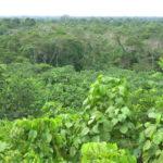 Zone forestière de Loreto © Fondation GoodPlanet