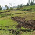 Des parcelles agricoles en Ethiopie.