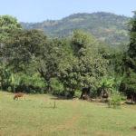 La campagne en Ethiopie