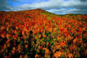 Forêt d'automne dans la région de Charlevoix Québec Canada (c) Yann Arthus Bertrand