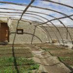 Culture sous serre d'oignons, palak (variété d'épinard), radis, etc. © Fondation GoodPlanet