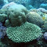 Protection des récifs coraliens à l'Ile Maurice