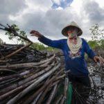 Habitant de Bahoi-Indonésie (2) carre ACS