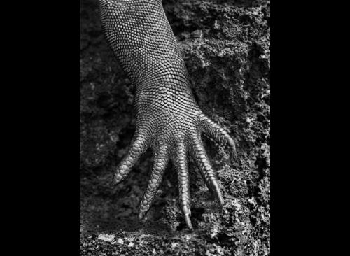 photo extraite de l'exposition Genesis © sebastiao salgado
