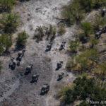 Elephants dans le Delta de l'Okavango au Botswana - photo © Yann Arthus-Bertrand