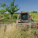 Agroforesterie tracteur