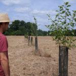 Agroforesterie Aquitaine