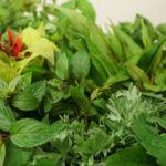 Des herbes aromatiques.