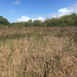 Mise en place d'une Eco-zone à Maurice