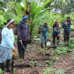agriculteurs exploitants agroforesterie Equateur forêt