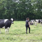 femmes agricultrices champs vaches france