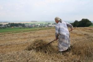 Agricultrice procédant au fanage de la paille. photo CC BY-SA 2.5 Jean-Pol Grandmont