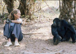 Jane Goodall jeune
