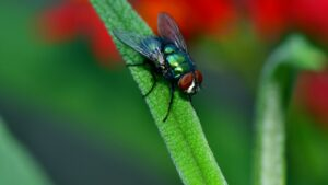 insecte-pollinisation